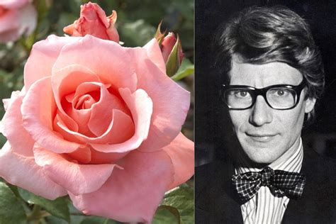16 Flowers Named for Celebrities Photos | Architectural Digest