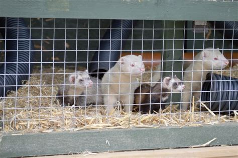 Building Ferret Mansion: Part 2 - WELL I GUESS THIS IS