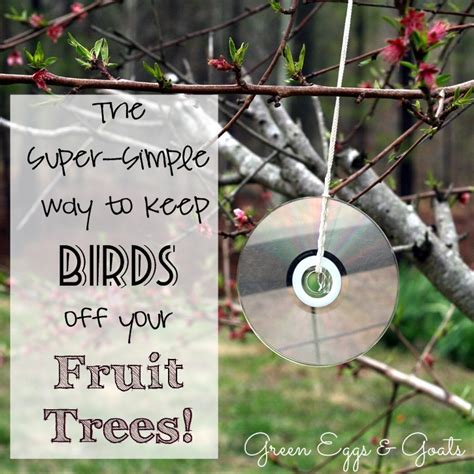 Getting rid of birds off my olive trees | TigerDroppings